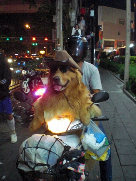 dog on a motorbike bangkok