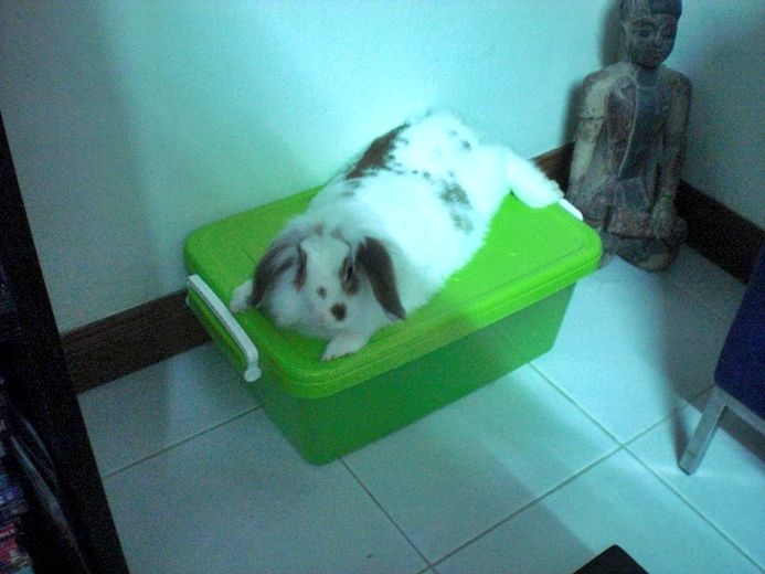 How Much Does Keeping a House Rabbit in Thailand Cost Every Month ...
