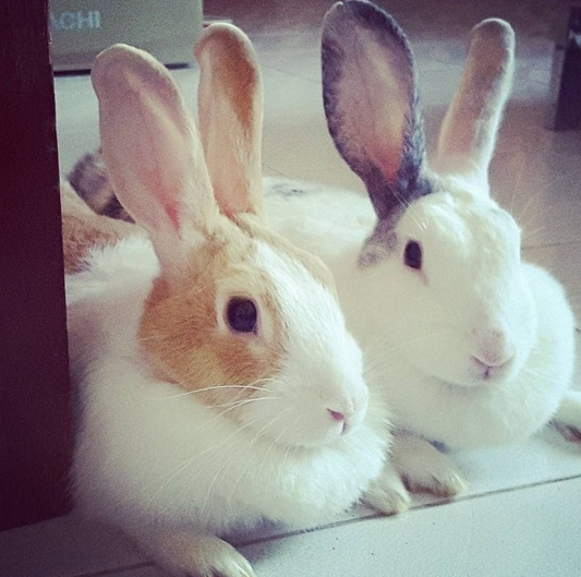 Buying a pet in Thailand, including rabbits, is something you need to consider carefully.